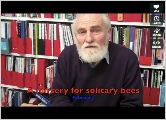 How to make a nursery for solitary bees