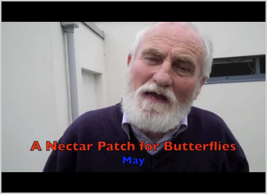 A Nectar Patch for Butterflies