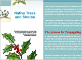 How to propagate Native Trees and Shrubs from cuttings and Hollies from berries