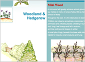 How to Make a Mini-Wood and Native Hedgerow